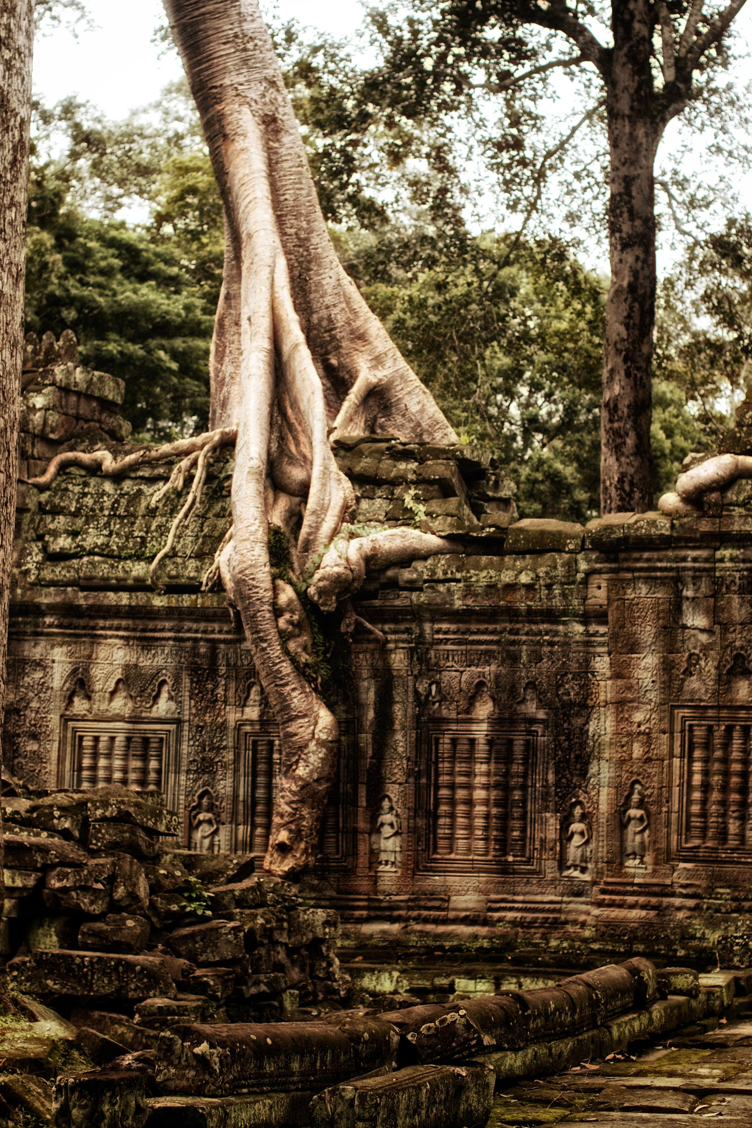 trees take over Preah Khan.jpg