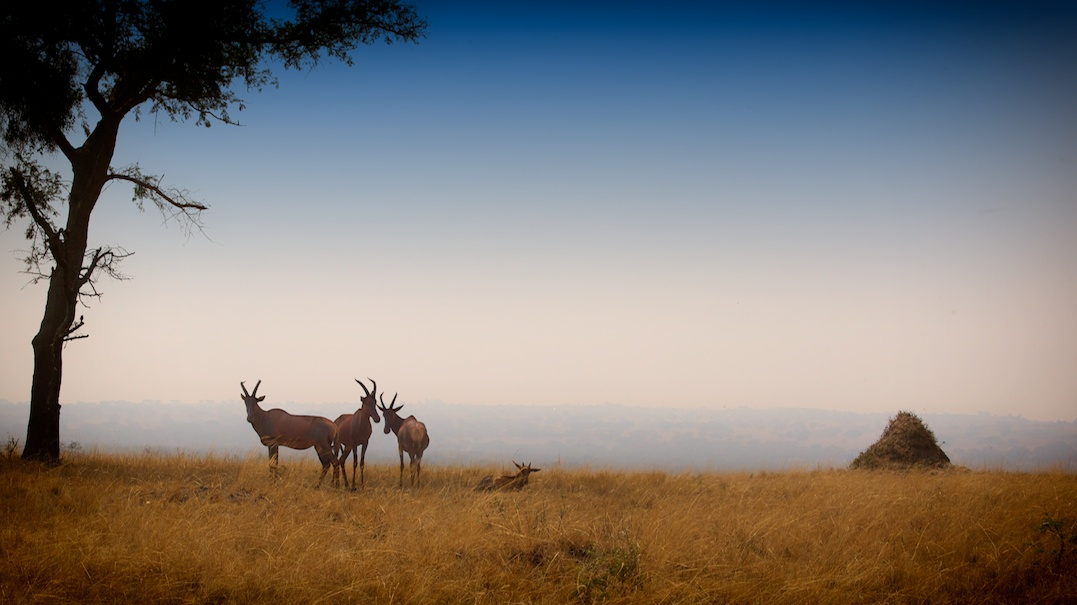 Animals along the rd to Ishasha
