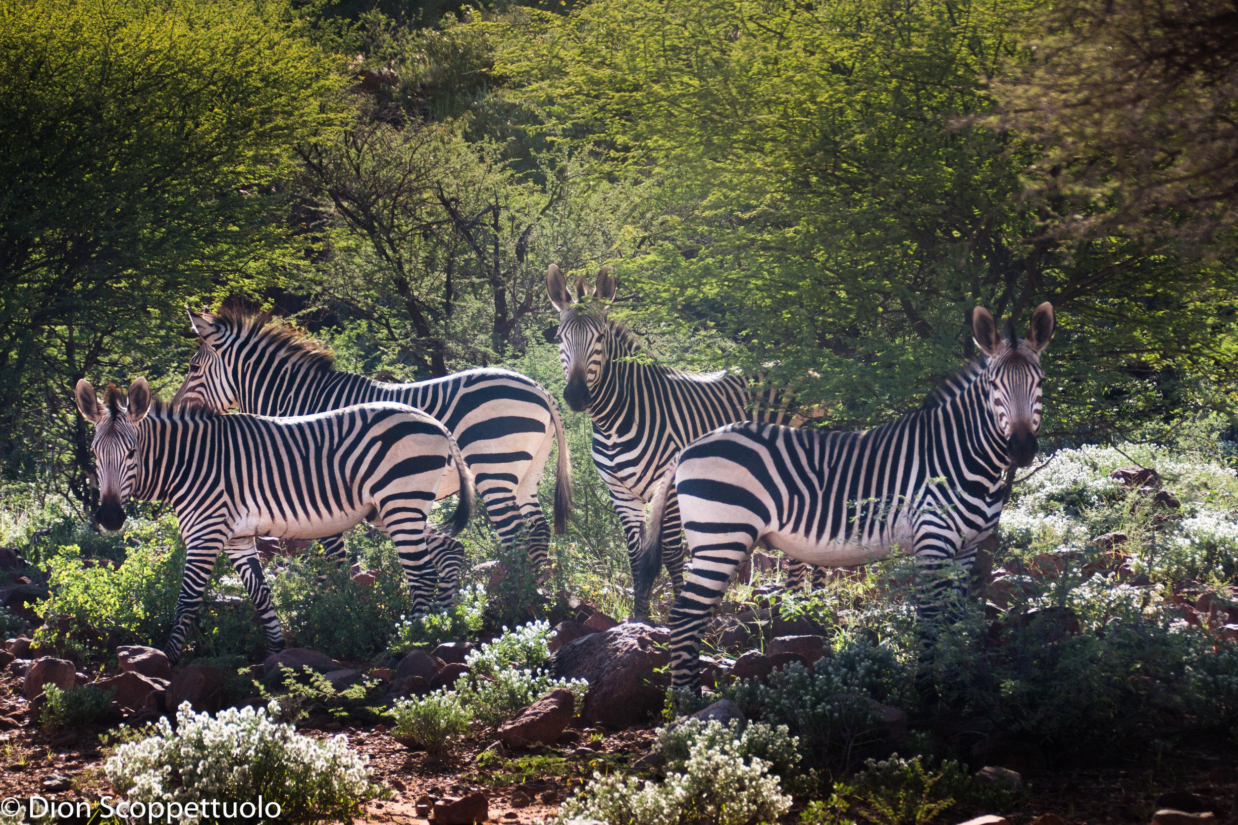Namibia-103.jpg