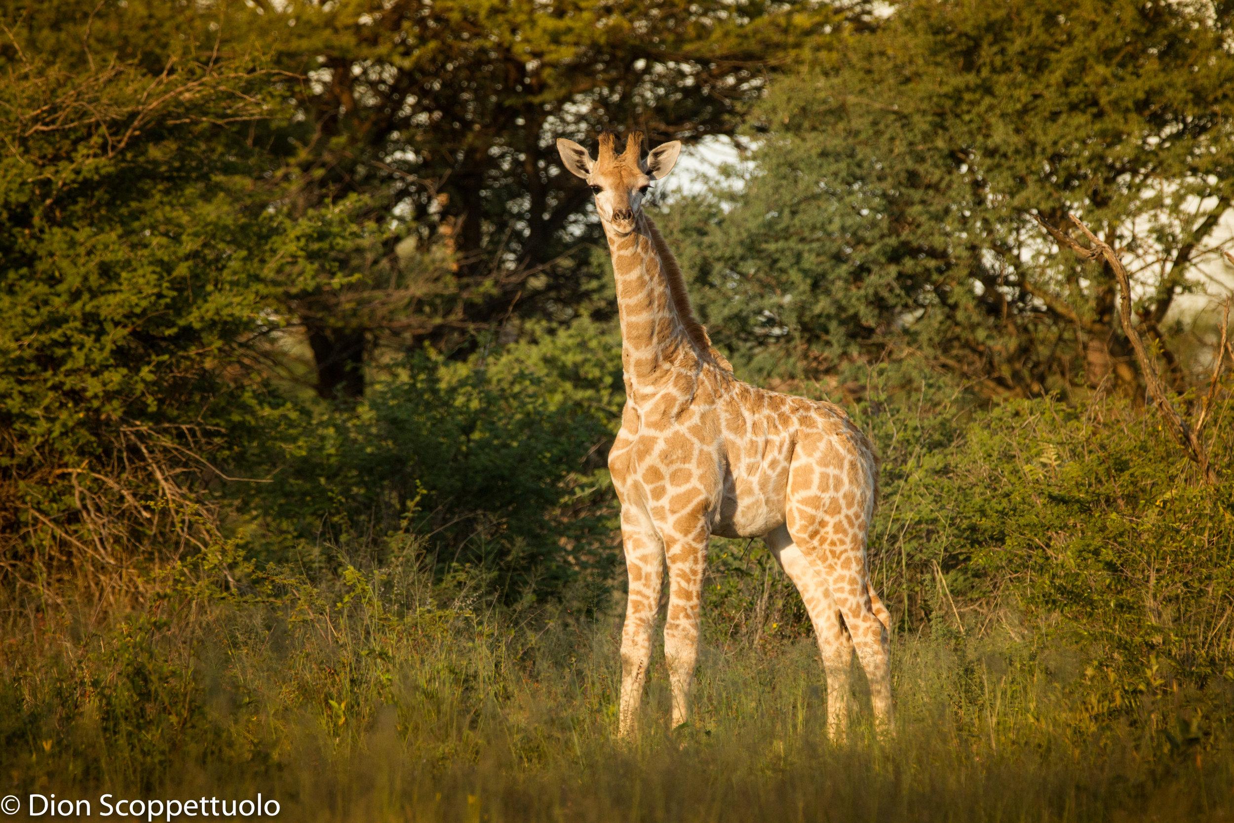Namibia-109.jpg
