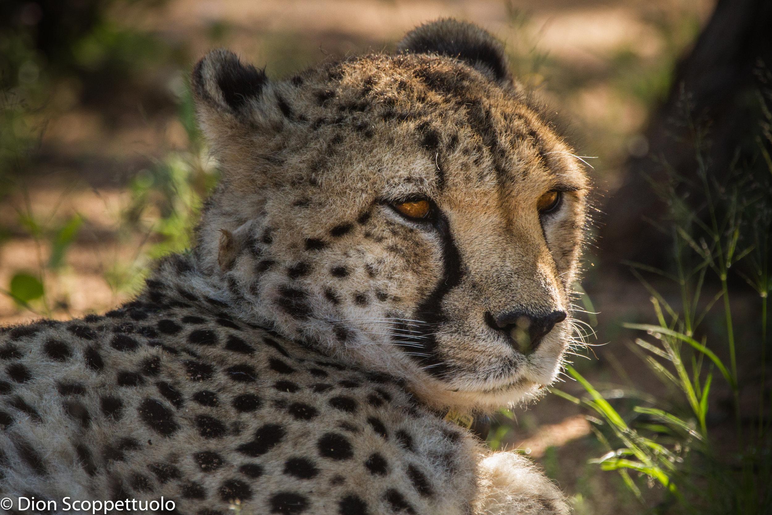Namibia-112.jpg