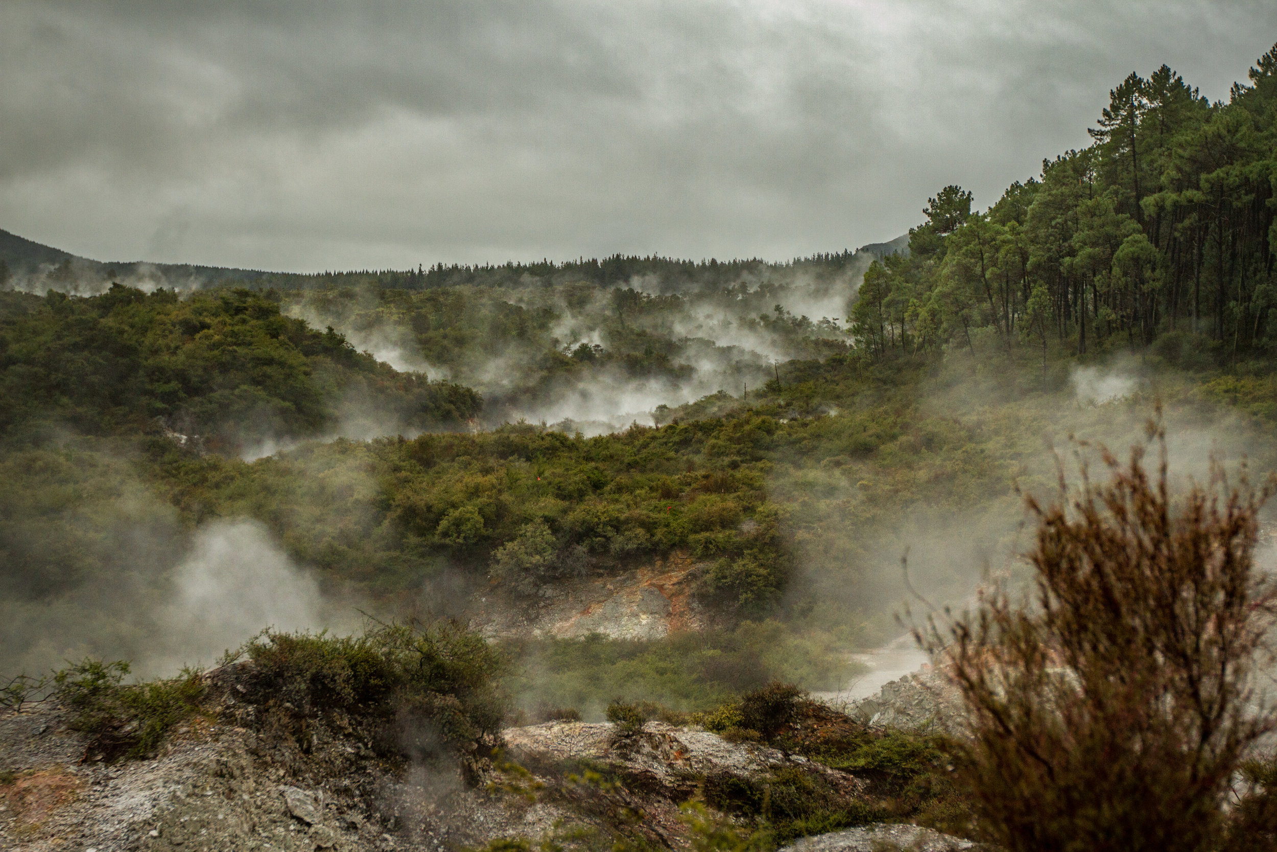 NZ-12.jpg