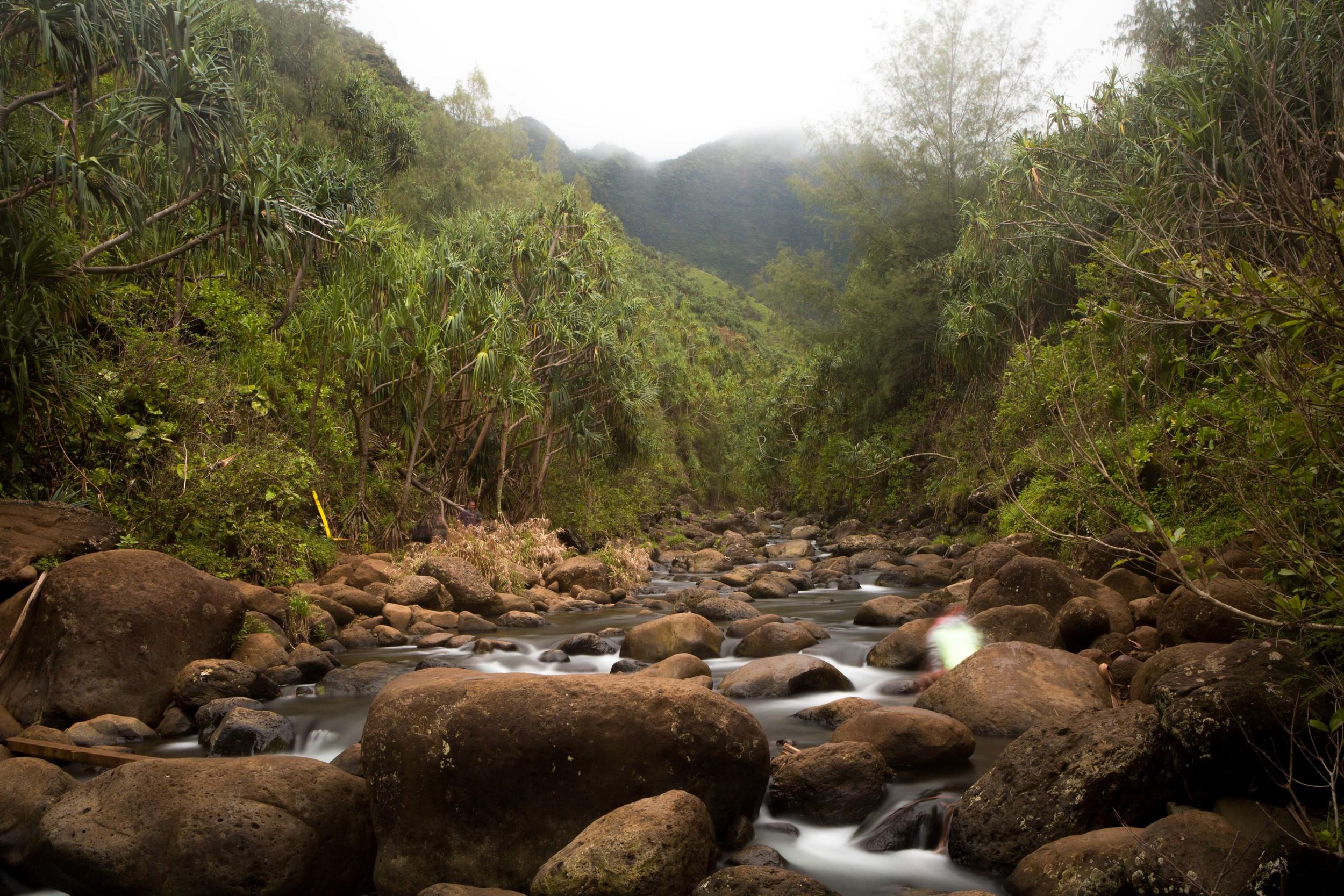 Kauai_day2_-241-2.jpg