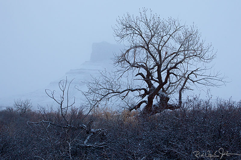 The ghost of Parriott Mesa [elevation 6155'] rises behind a gnarled tree during a Castle Valley snow storm.