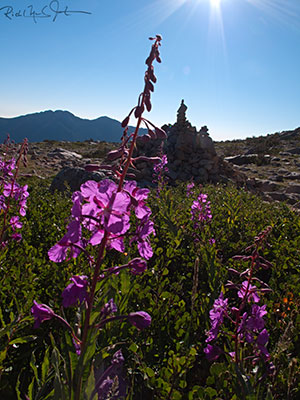 7:20 AM: Still above the tree line, descending through 10,800 feet. Wildflowers and a route marker.