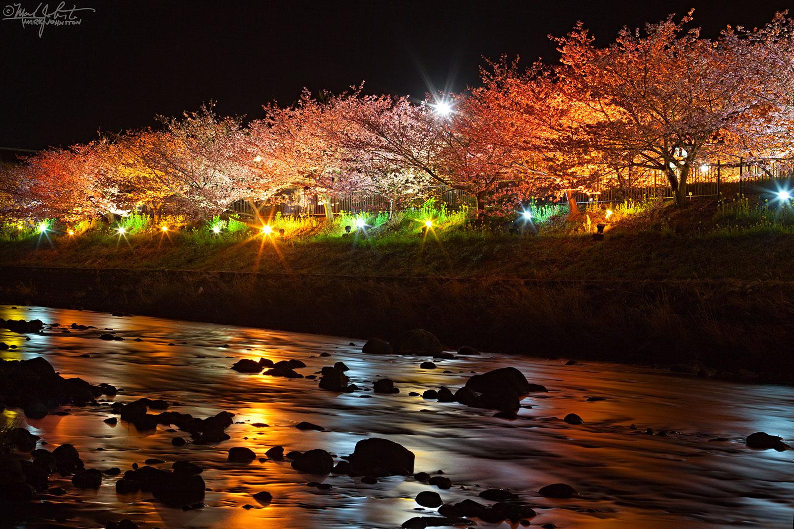 The trees are illuminated on certain evenings.