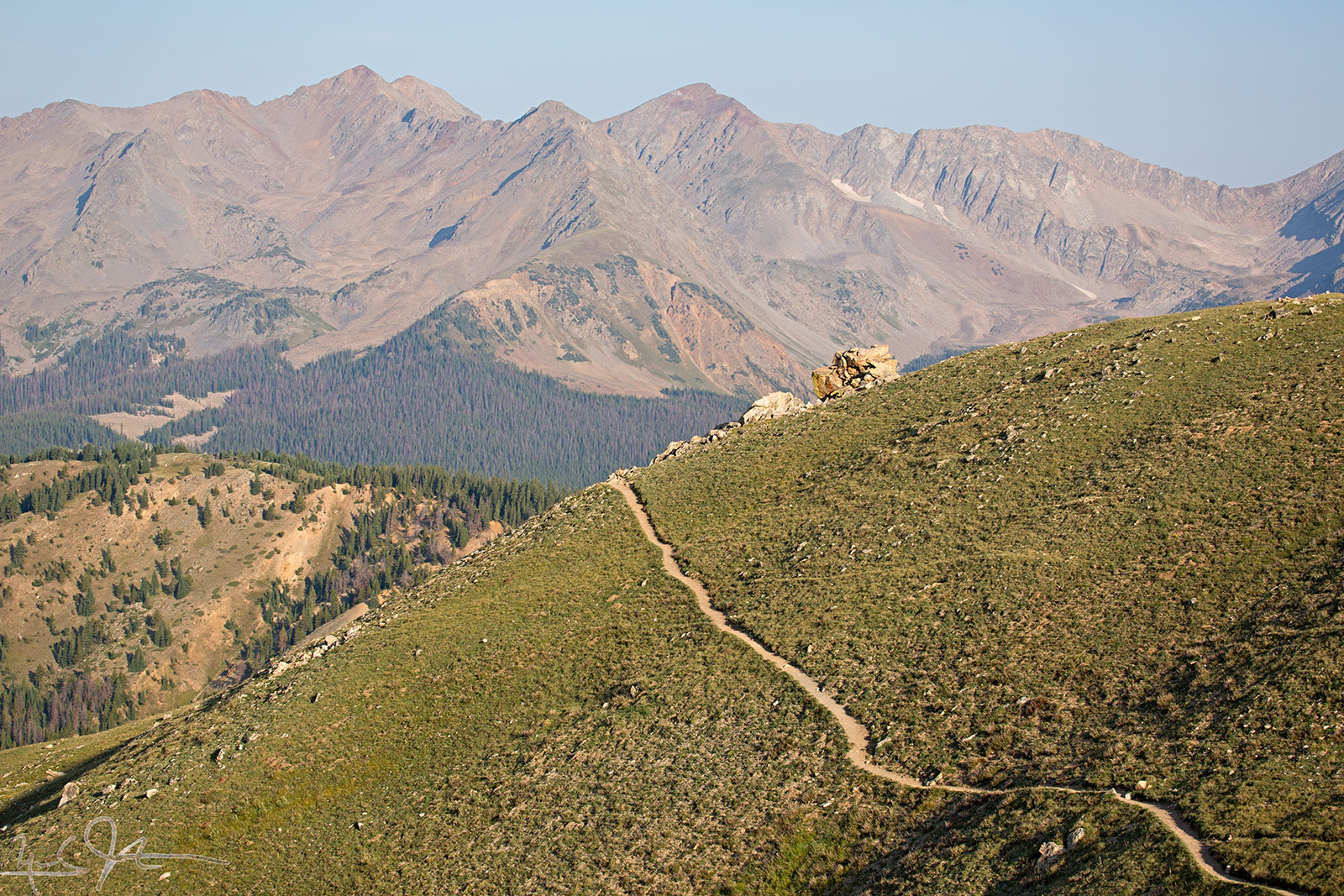 Many paths in addition to the human trail.