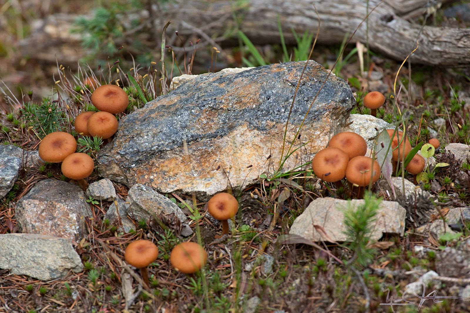 Many mushrooms burst forth.