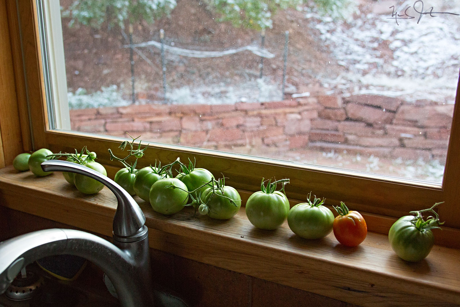 Hopefully, mature enough to ripen on the window sill.