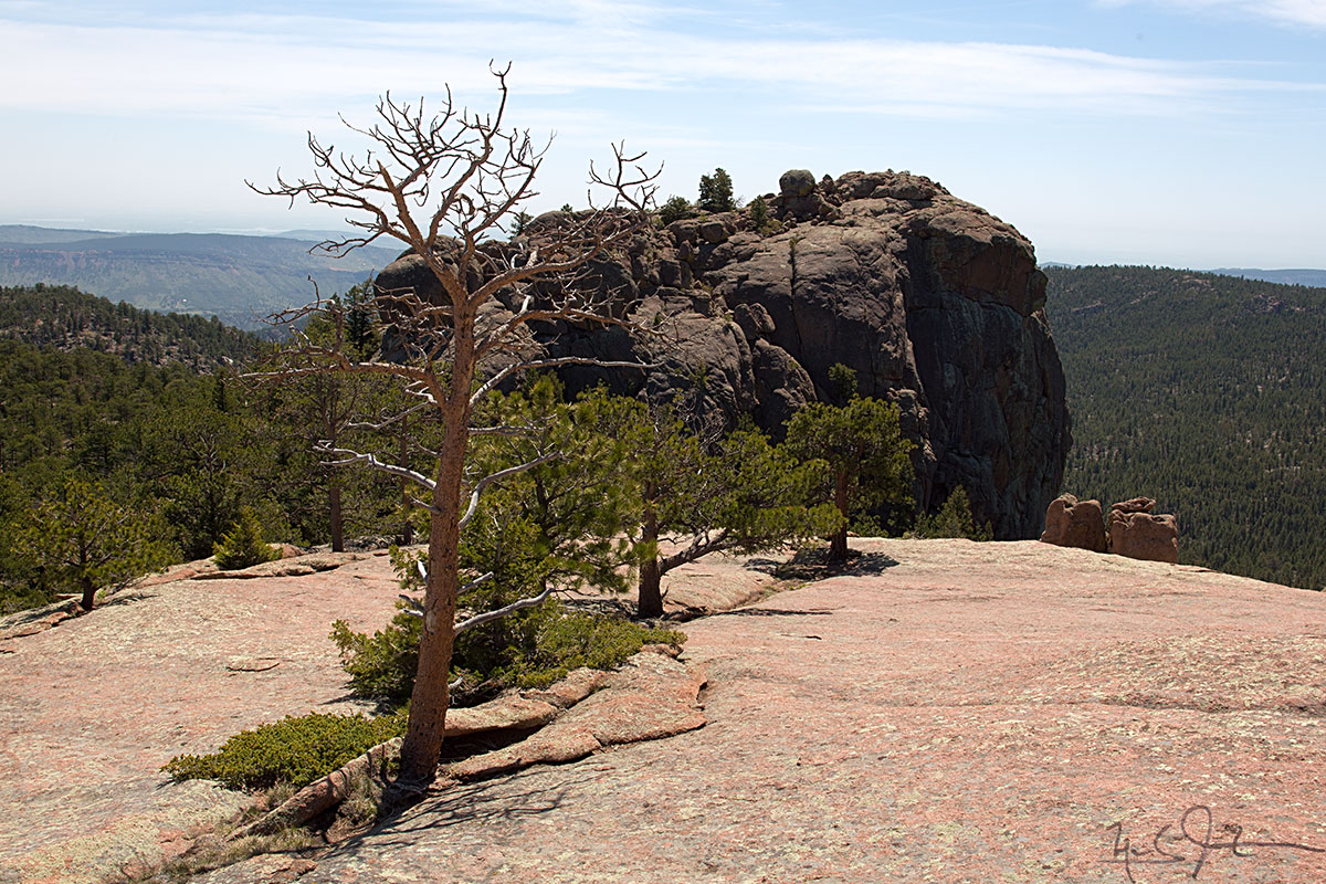 Trees grow in a crack in Button Rock.