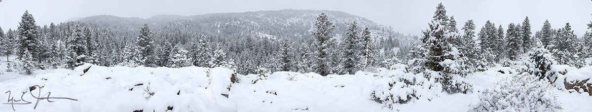 After a snow storm in the foothills east of the Rocky Mountains.