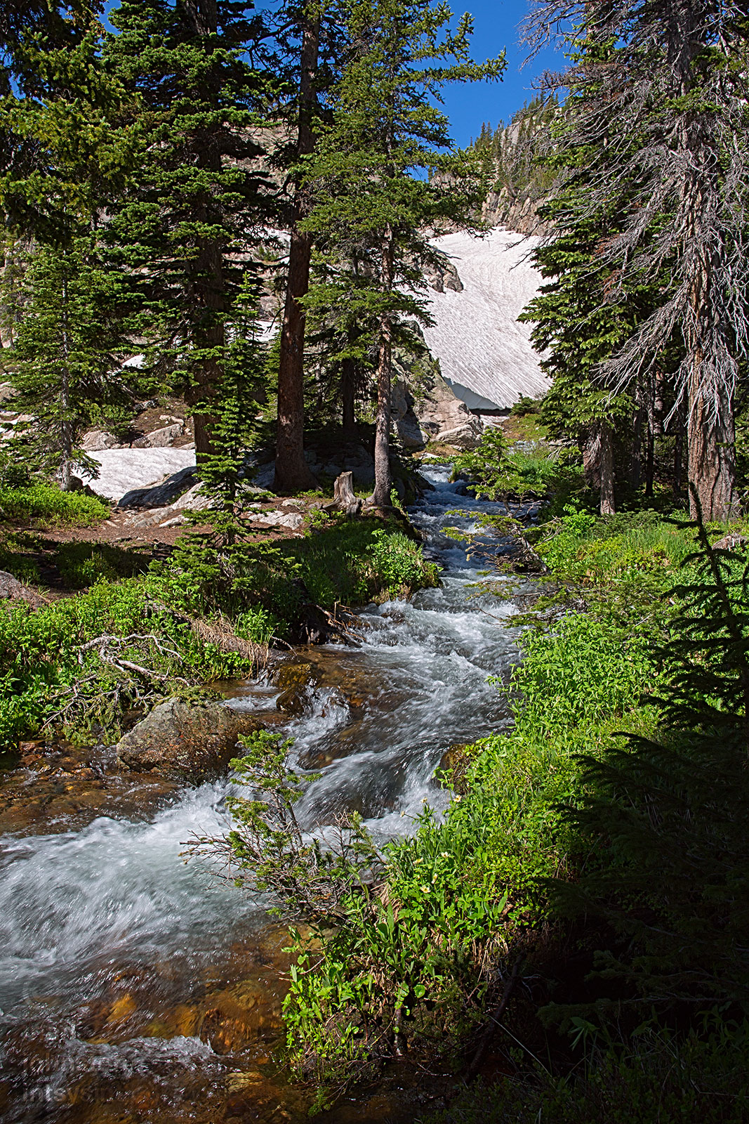 The head of St. Vrain Creek as it emerges from a snow bank below Bluebird Lake.