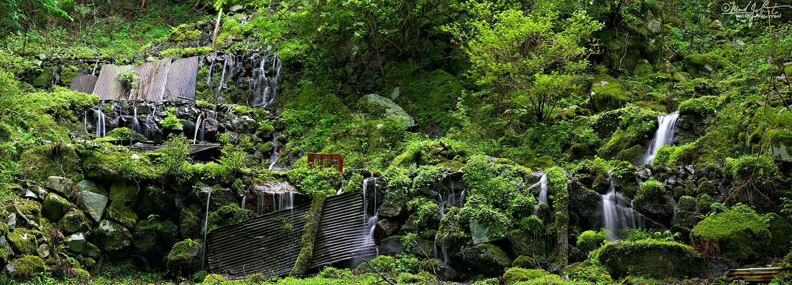 An abandoned wasabi field in the Amagi Mountains of the Izu Peninsula, Shizuoka Prefecture, Japan.