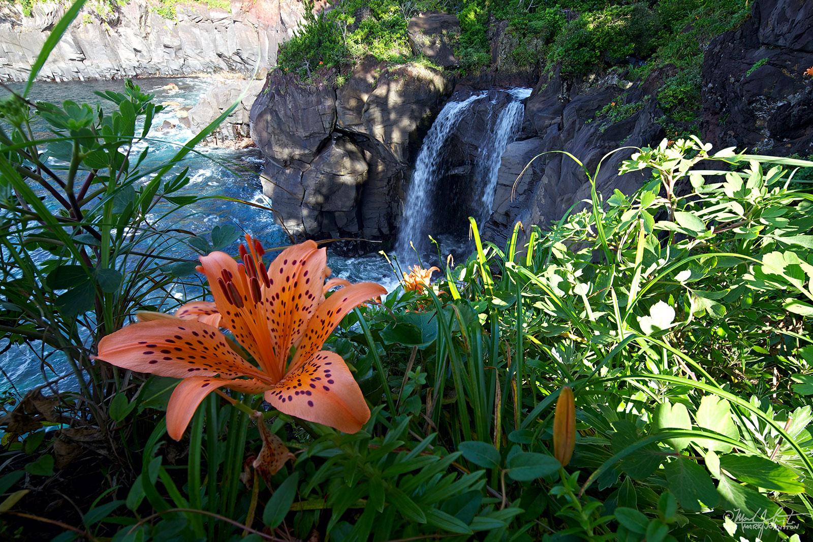 Tajima Falls [対島滝] and lily, Izu Penninsula, Shizuoka Prefecture, Japan.