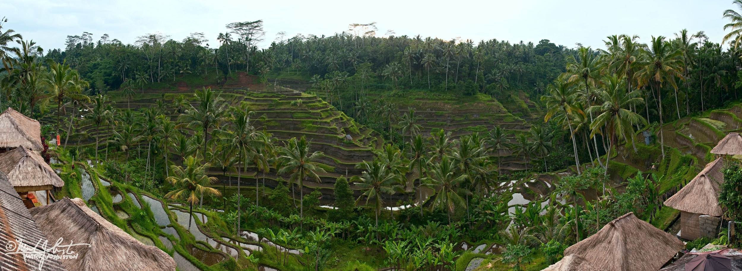 Terraced fields and thatch-roofed dwellings, Bali, Indonesia.