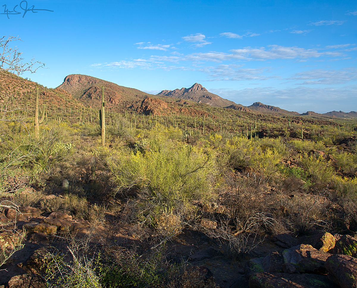 "The Sonoran Desert outside Tucson, AZ - with rain averaging 12 inches per year, one of the world's ""lushest"" deserts."
