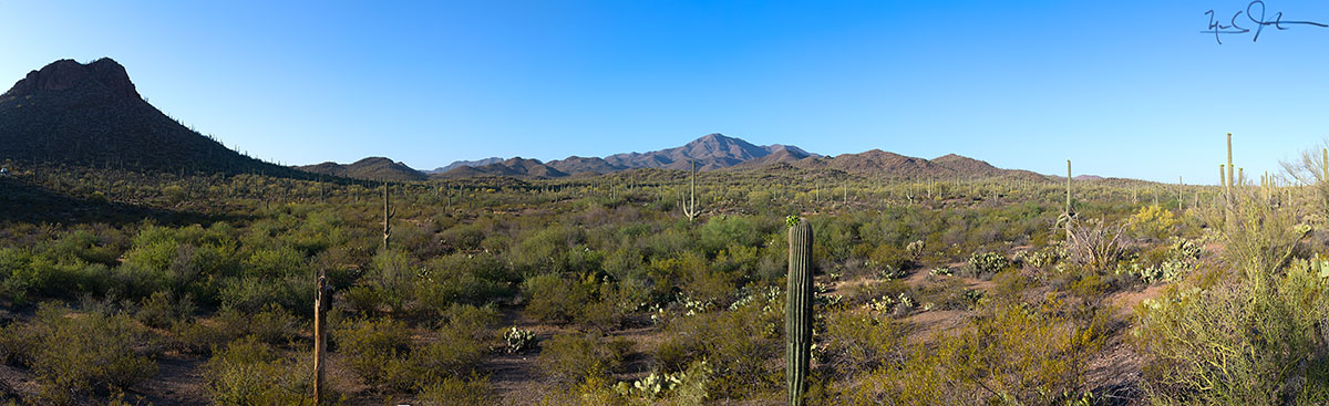 Saguaro National Park, Western District - panorama. Wasson Peak at center in distance.