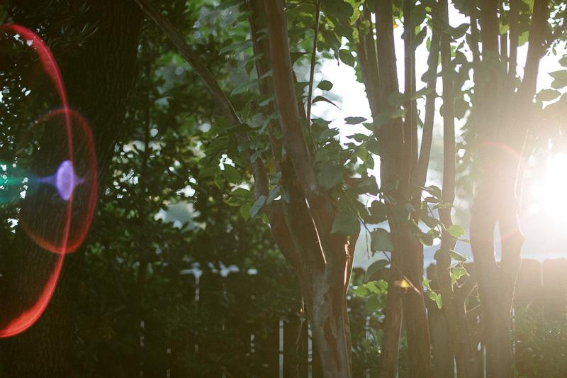 morninglight-2.jpg
