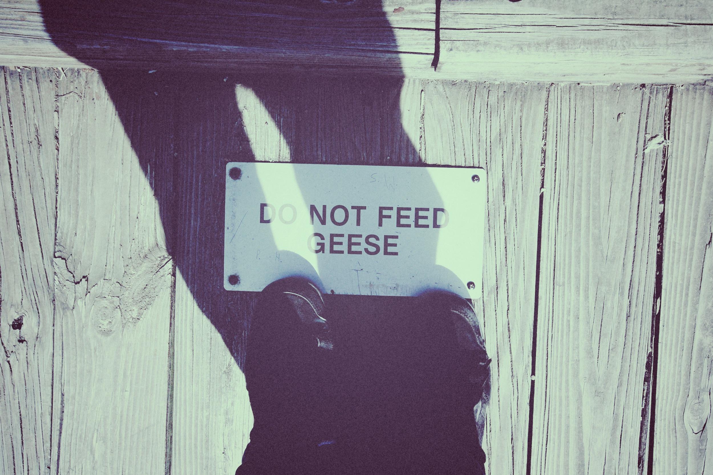 do not feed.jpg