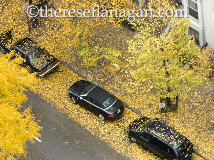 when the leaves come falling down.jpg