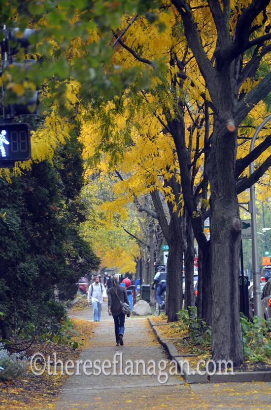 Autumn sm.jpg