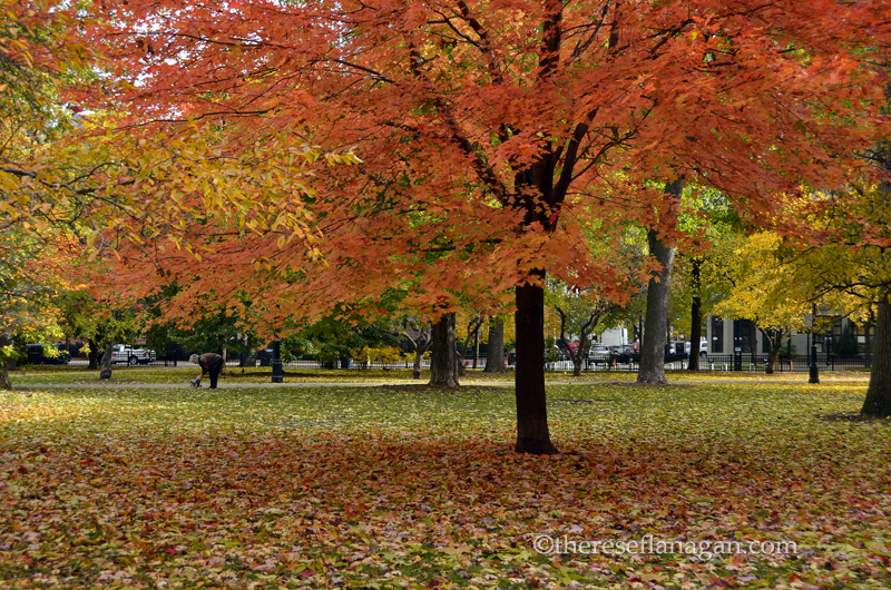 The Colors of Autumn 2013 Chicago.jpg