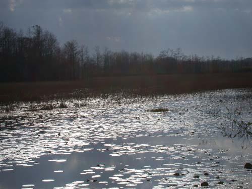 grassy waters preserve fotolog.jpg