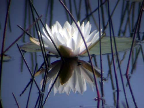 lotus fotolog.jpg