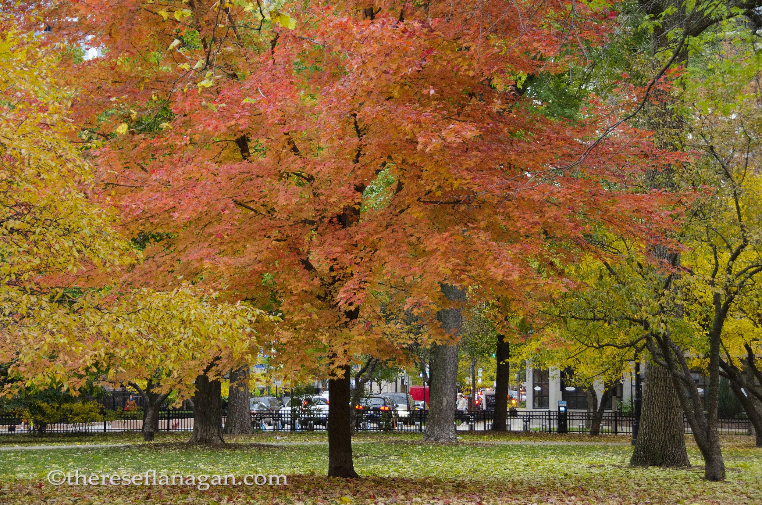 Washington Square Park | Chicago | Autumn