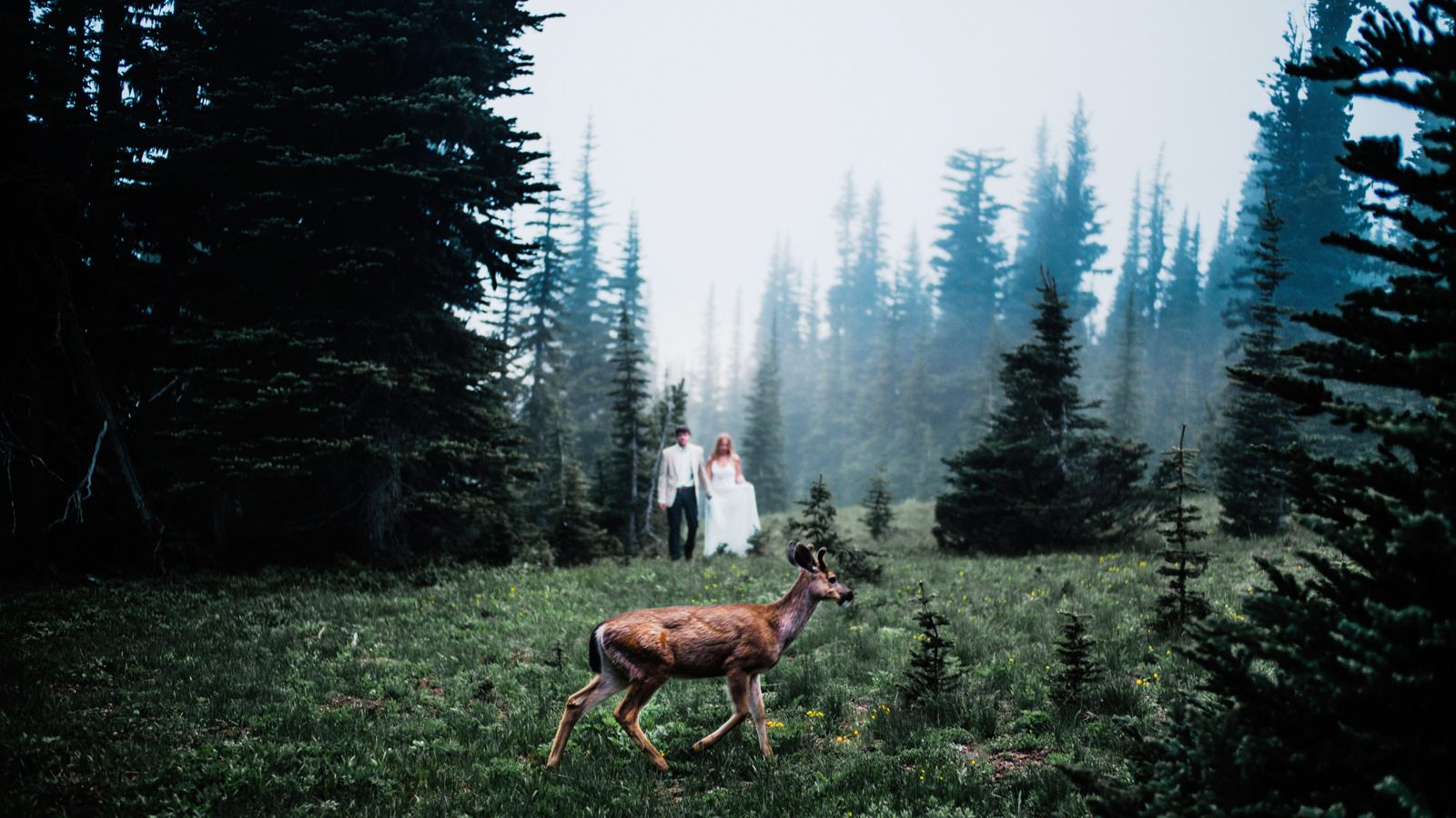 004-epic-foggy-wedding-photo-with-deer-at-mt-rainier-national-park-by-ryan-flynn.jpg