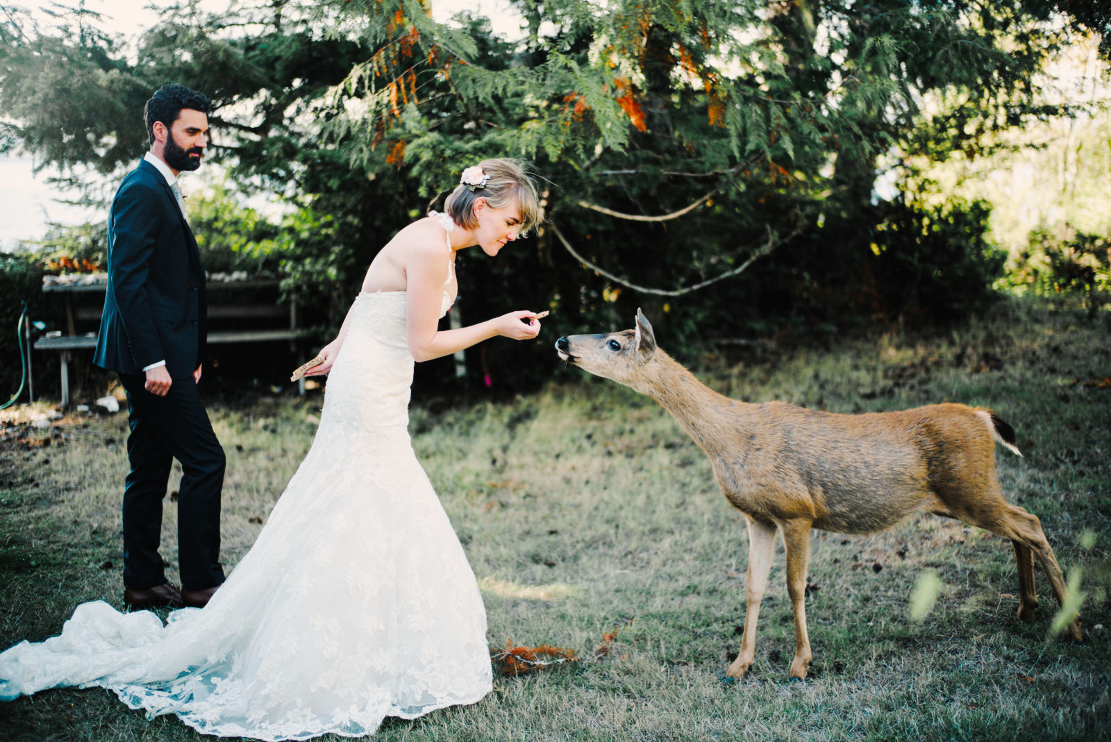 248-bride-feeding-deer-at-wedding-on-herron-island-washington.jpg