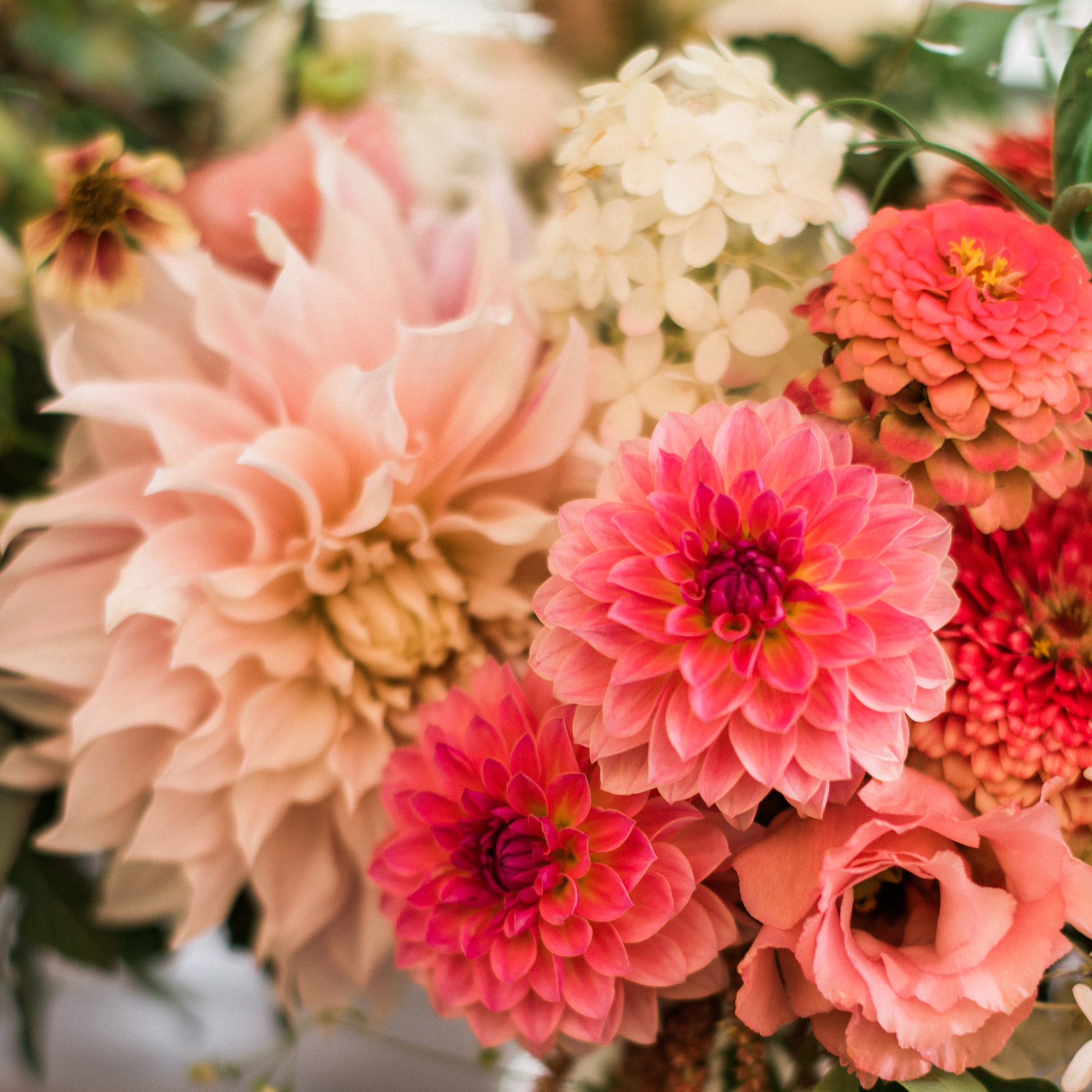 191-colorful-dahlias-from-floret-floral.jpg