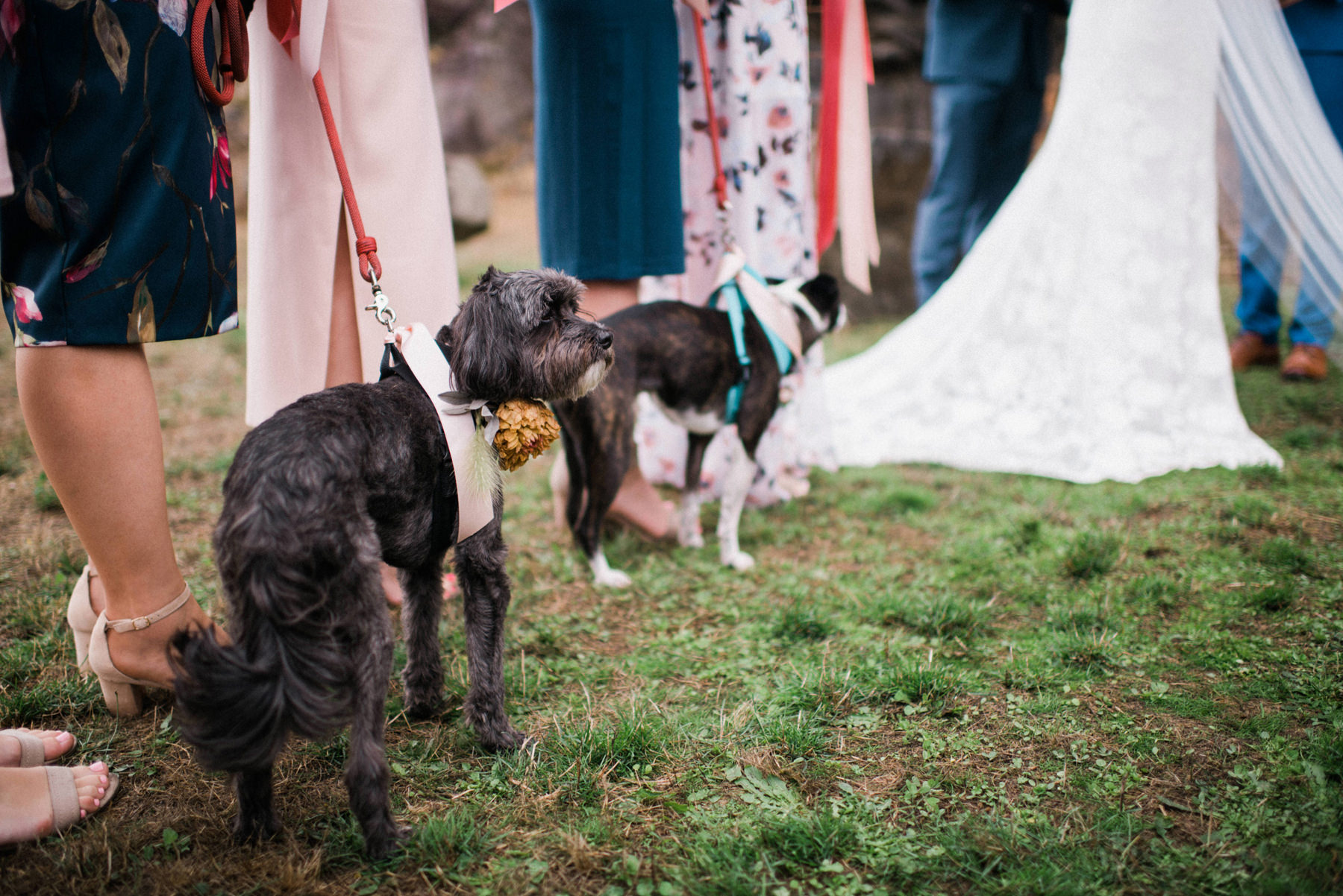 321-colorful-outdoor-lopez-island-wedding.jpg