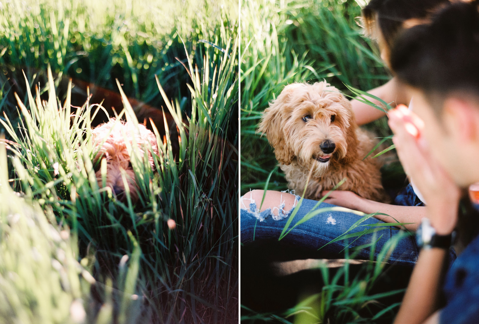 052-summery-engagement-session-with-a-goldendoodle-at-discovery-park-on-film.jpg