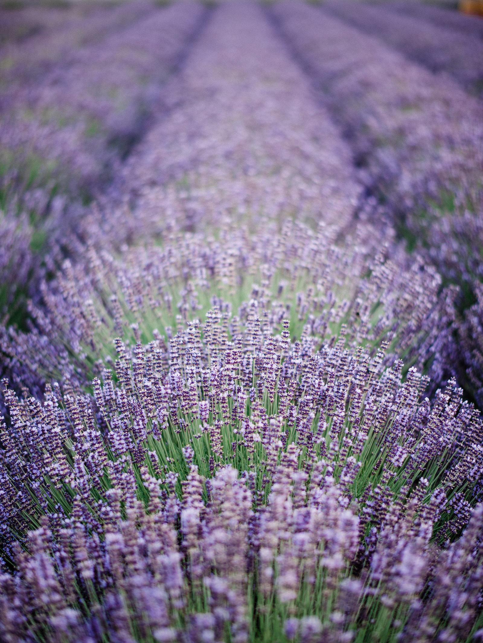 093-woodinville-lavendar-farm-wedding-with-golden-glowy-photos.jpg