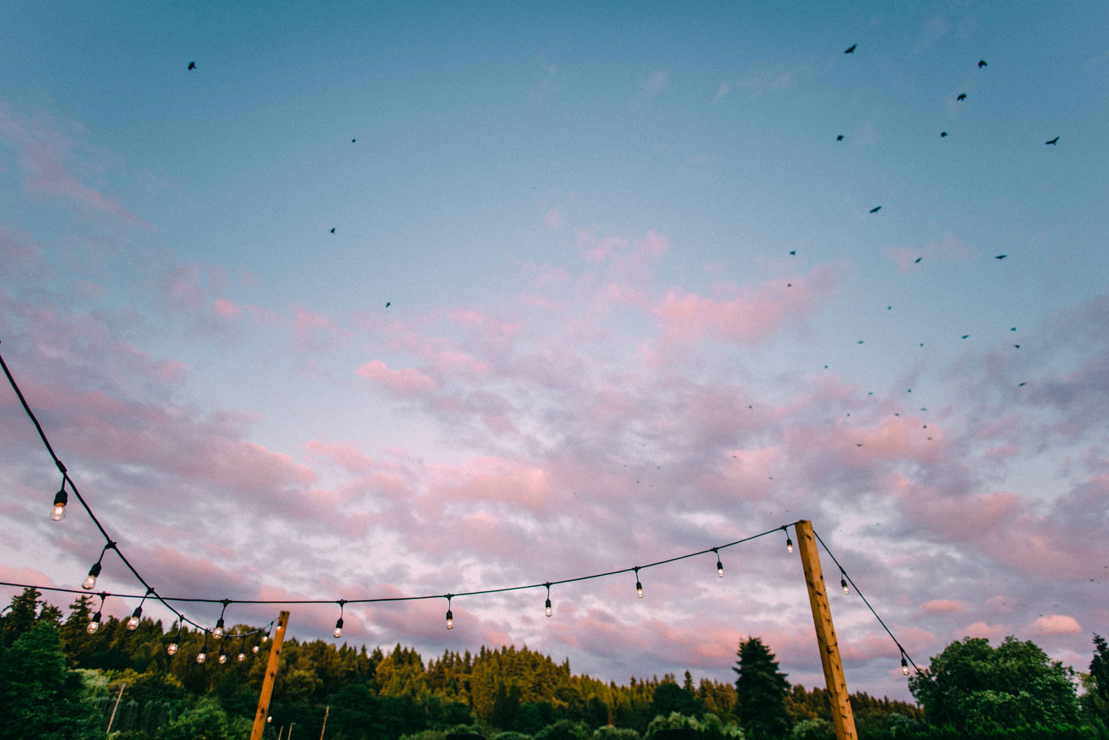 107-woodinville-lavendar-farm-wedding-with-golden-glowy-photos.jpg