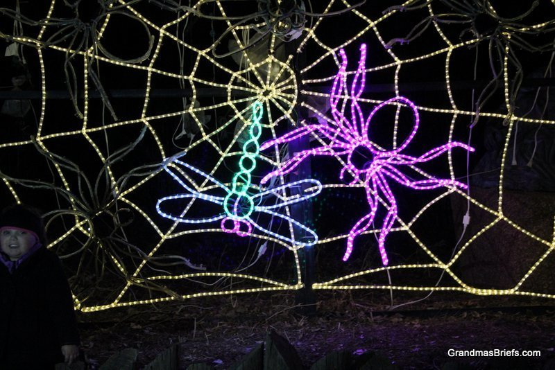 zoo+lights+3.jpg