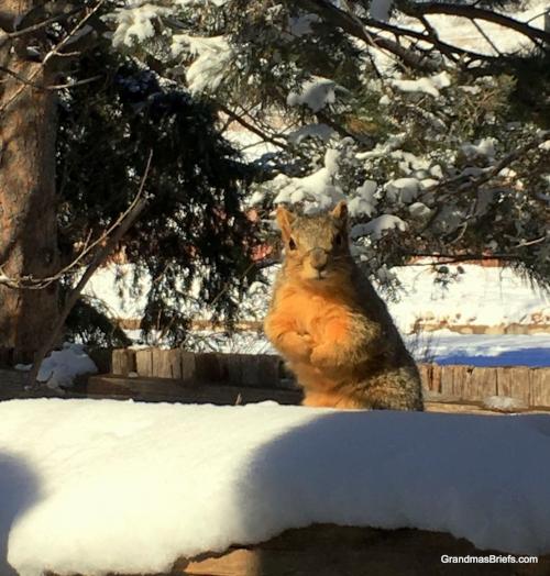 snow squirrel feb 2018.JPG