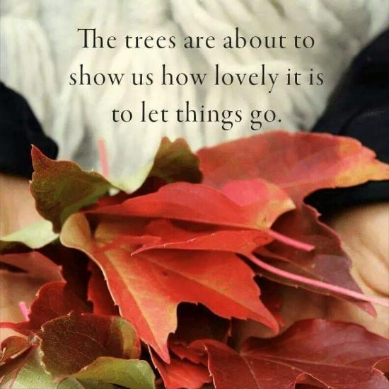 trees_let_go.jpg