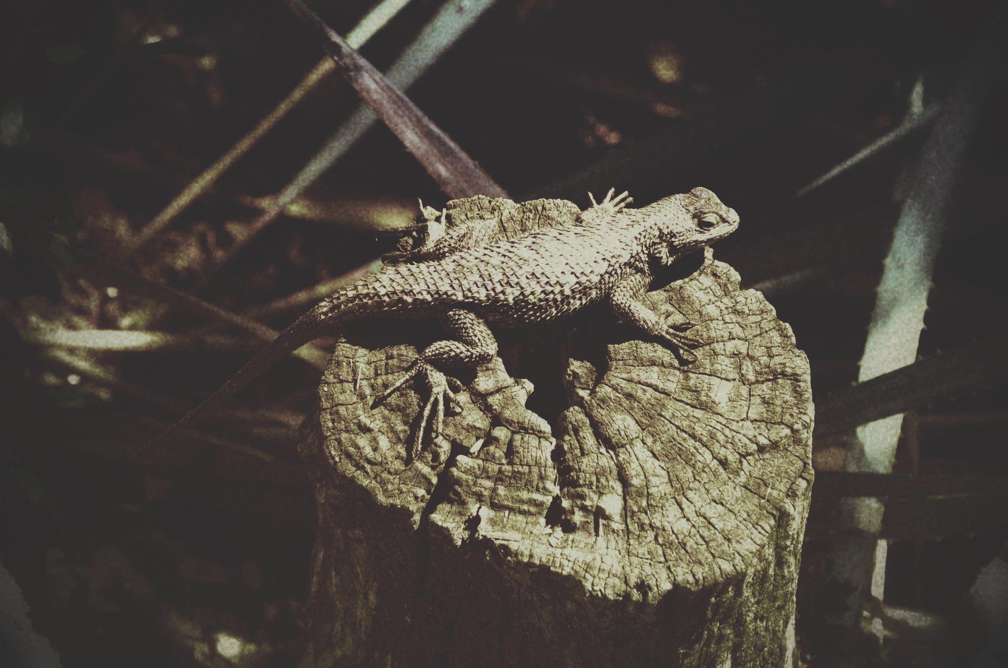 lizard brain = yolo