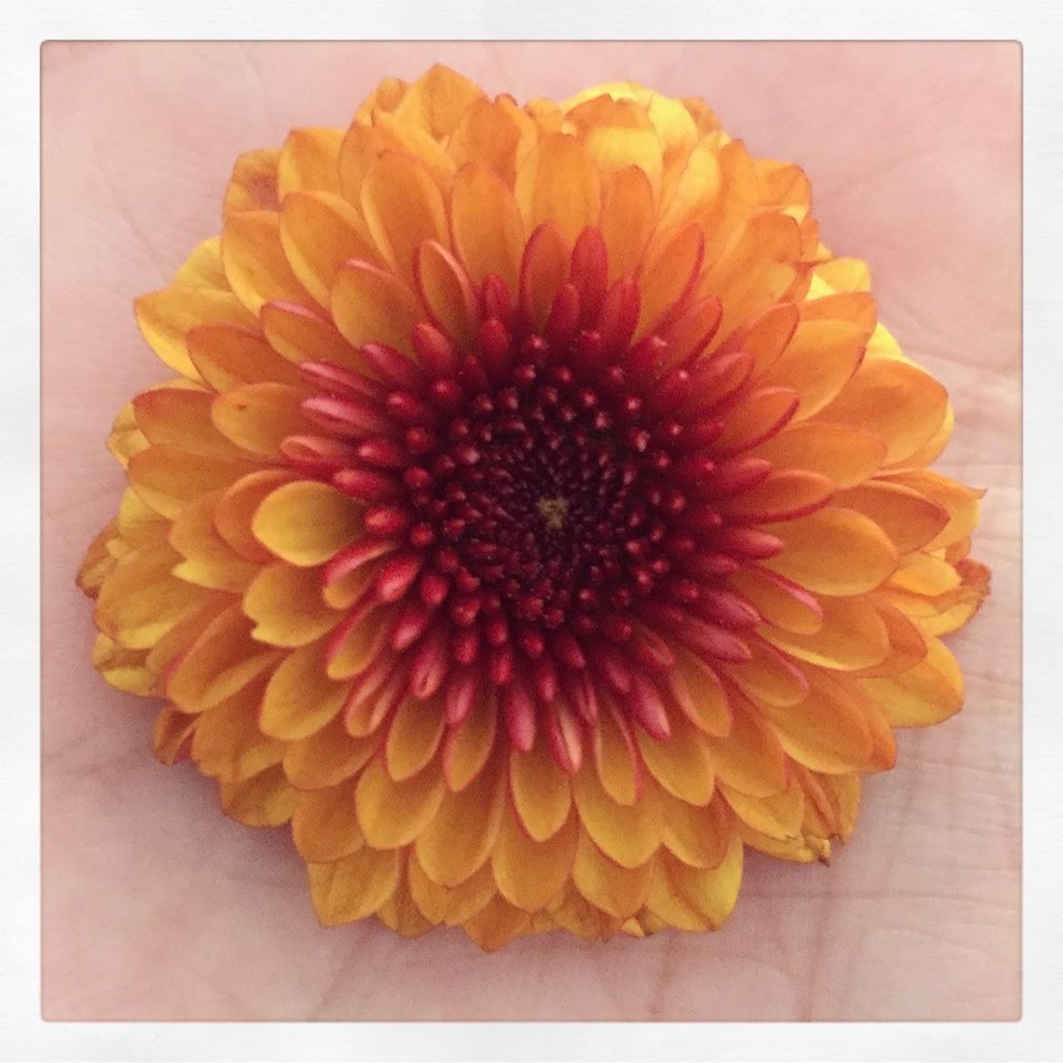 isharethisflowerwithyou.jpg