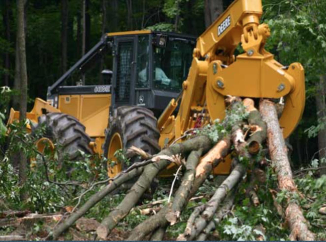 Tree Farm Cutting.jpg