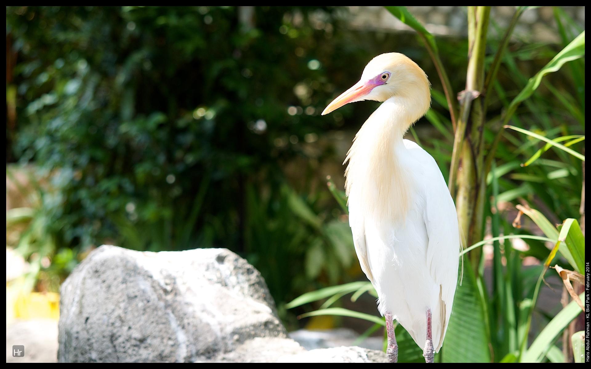 140223 KL Bird Park 1.jpg