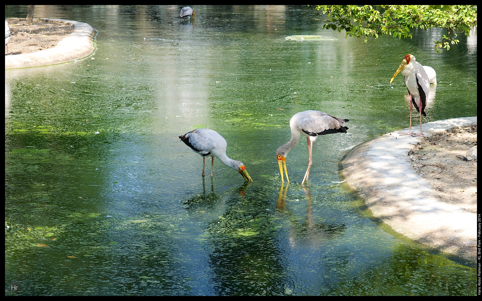 140223 KL Bird Park 20.jpg