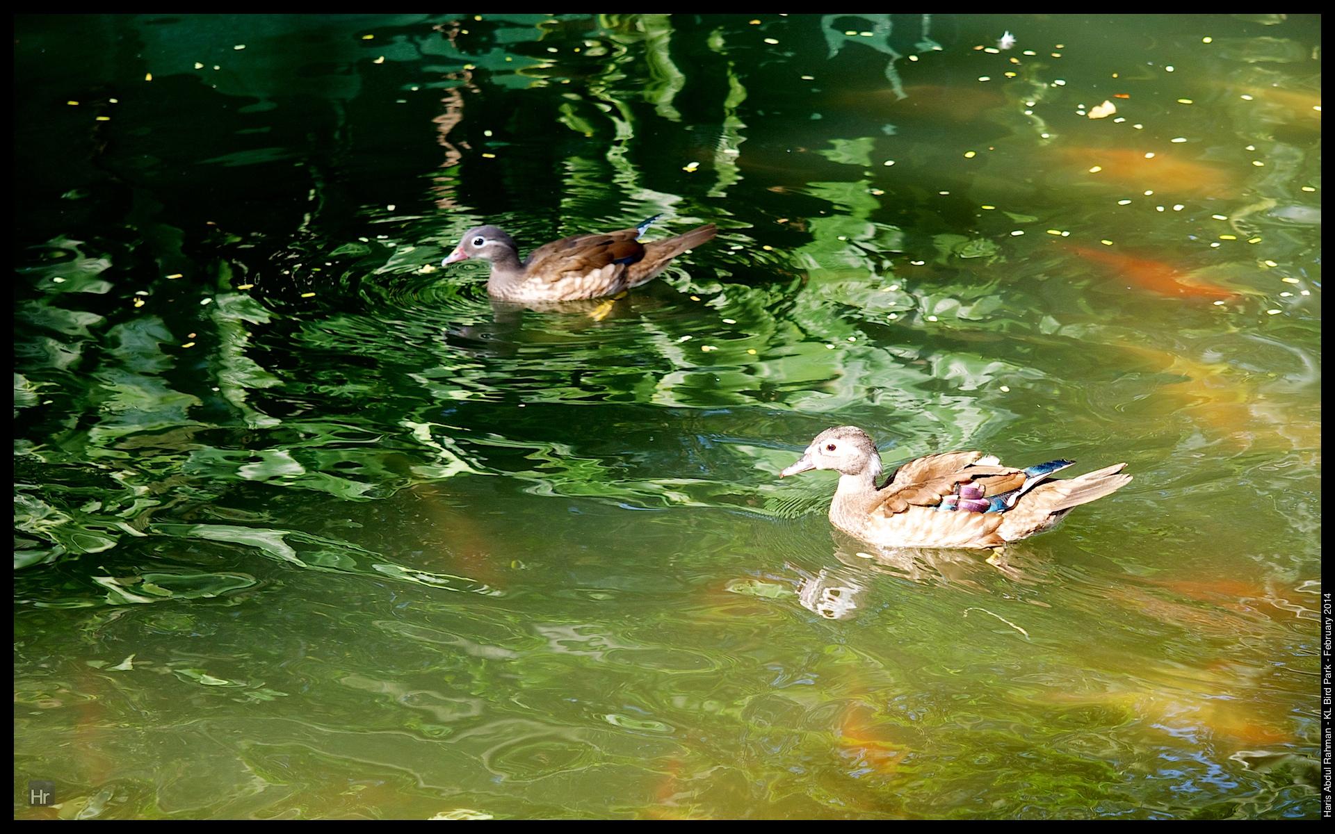 140223 KL Bird Park 21.jpg