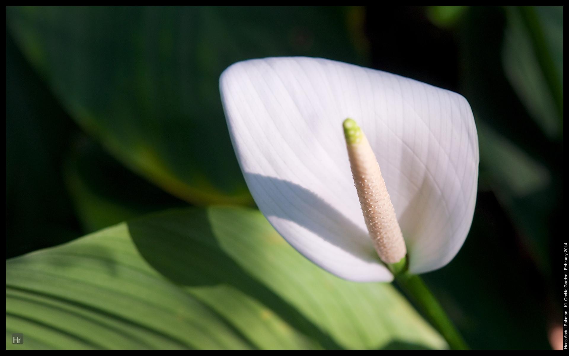 140223 Orchid Garden 14.jpg