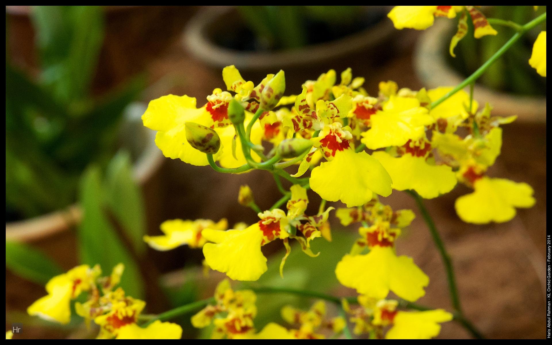 140223 Orchid Garden 16.jpg
