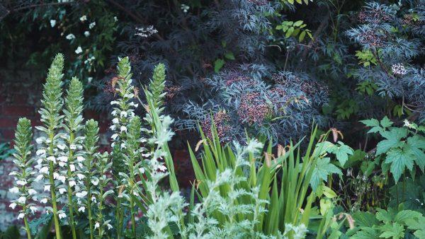 july-2018-rue-ledan-acanthus-600x338.jpg