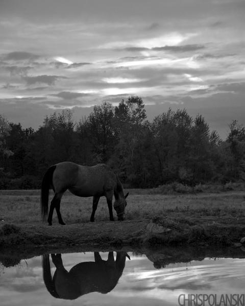 Pasture Reflections; Holland, NY
