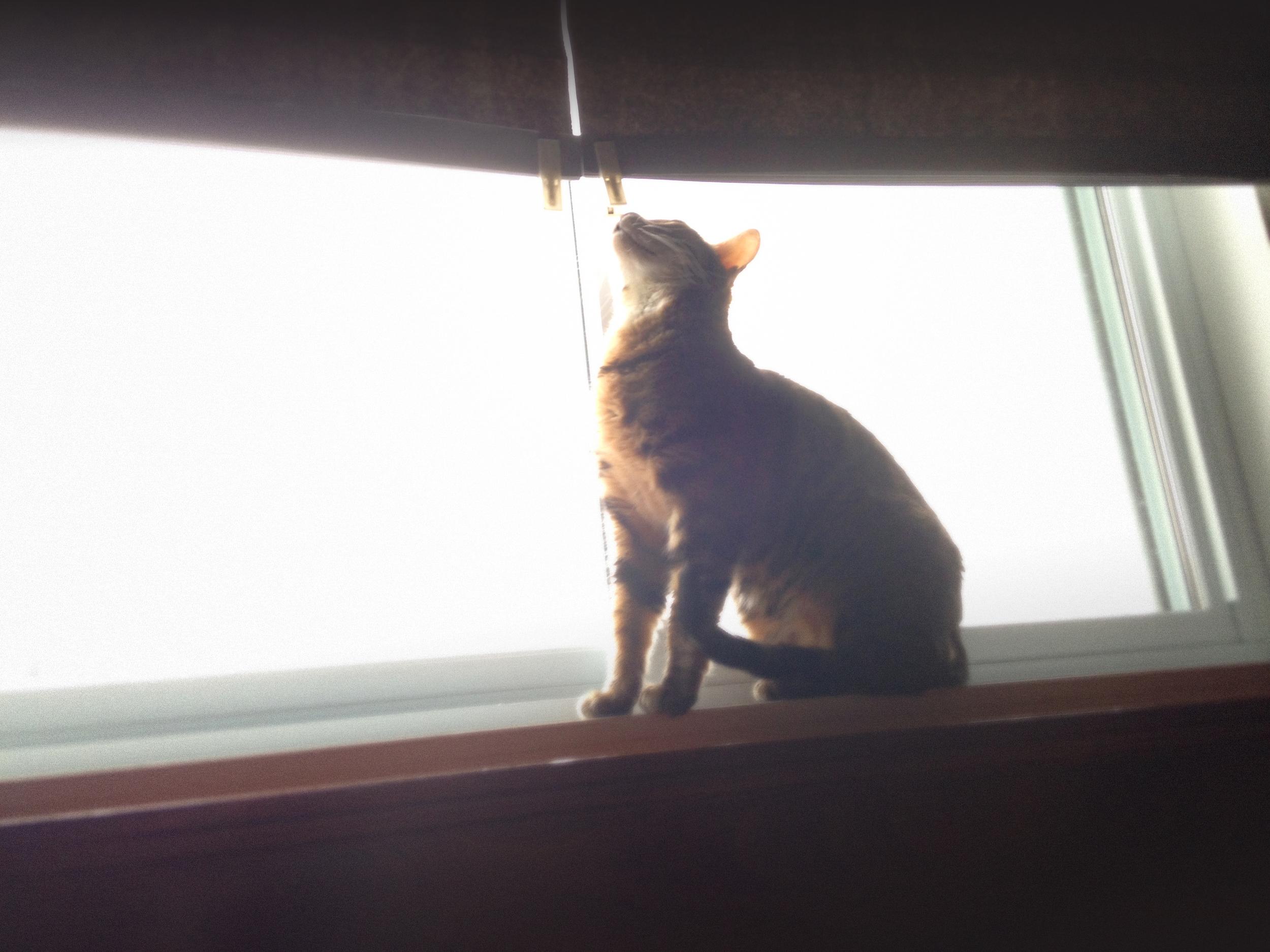 Nixie_window.jpg